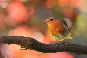 Garden bird hide